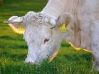 Varför välja ekologisk mat?