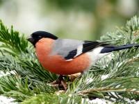 Stannfåglar visar förändringar i klimatet